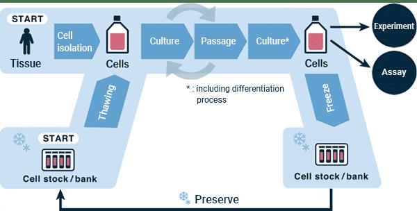 Quy trình nuôi cấy tế bào cơ bản